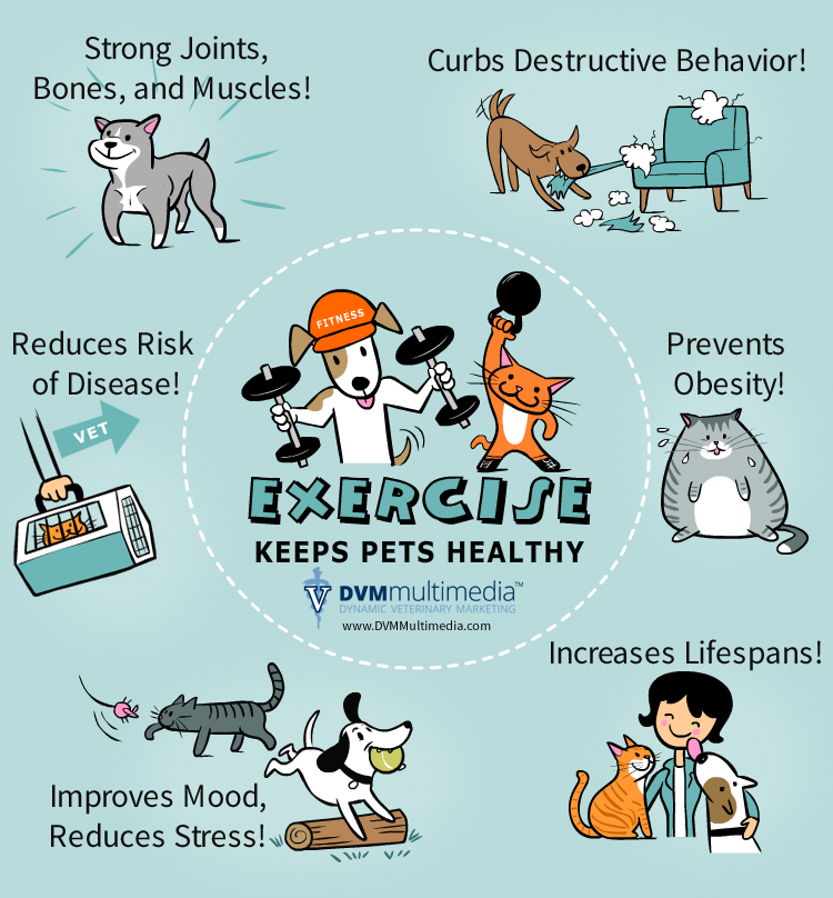 Exercise Keeps Pets Healthy in Las Vegas, NV | Town Center